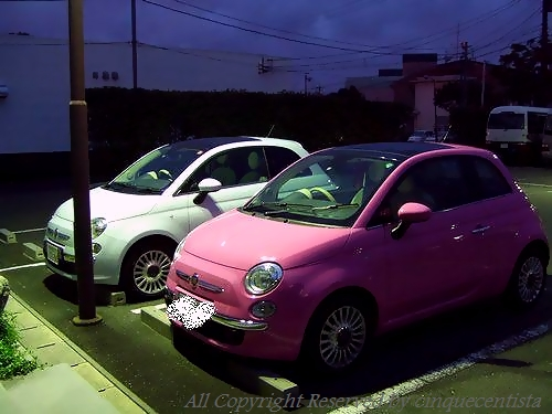 500 PINK! ピンク!(ローザローザ)